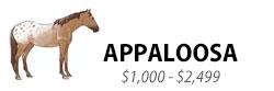 Appaloosa, $1,000-$2,499
